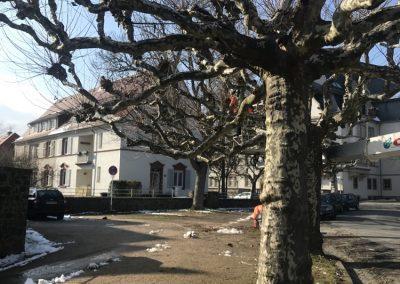 Baumpflege - Bäume
