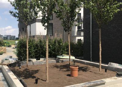 Baumpflege-4